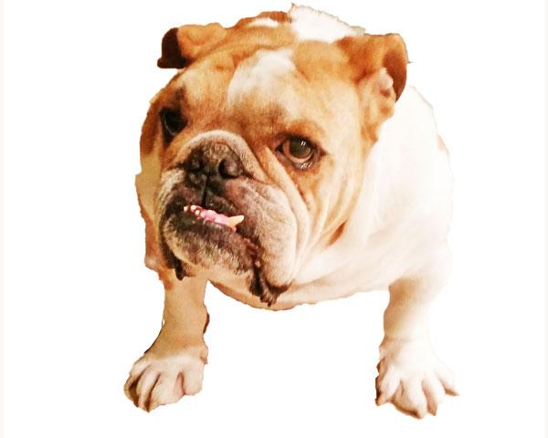 flaky dog nose