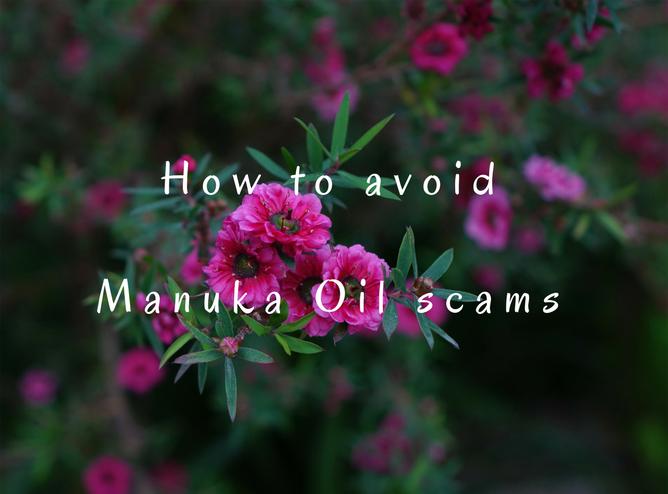 High triketone content Manuka Oil